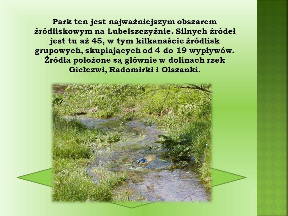 Park ten jest najważniejszym obszarem źródliskowym na Lubelszczyźnie.