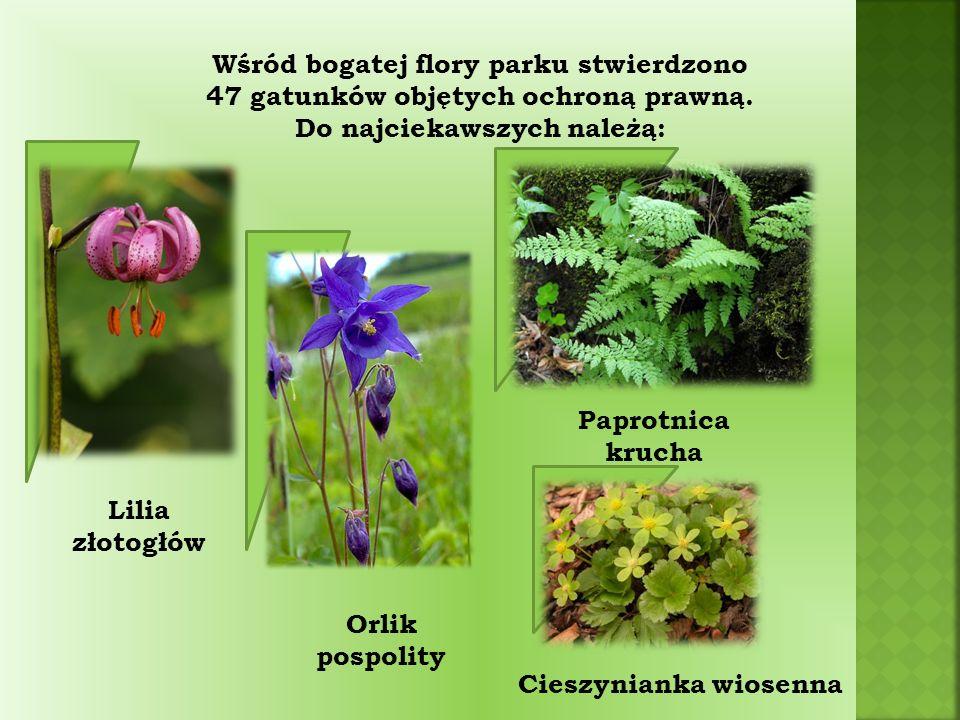 Wśród bogatej flory parku stwierdzono 47 gatunków objętych ochroną prawną.