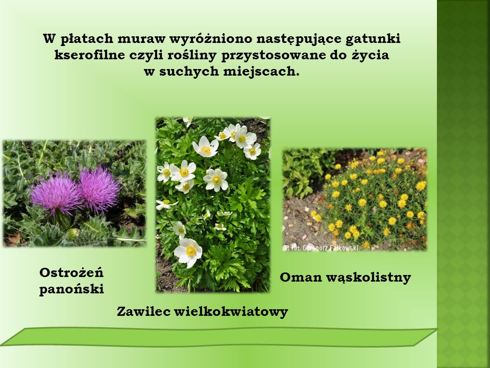 Kumak nizinny Rzekotka drzewna Ropucha szara W parku można spotkać rzadko występujące płazy: