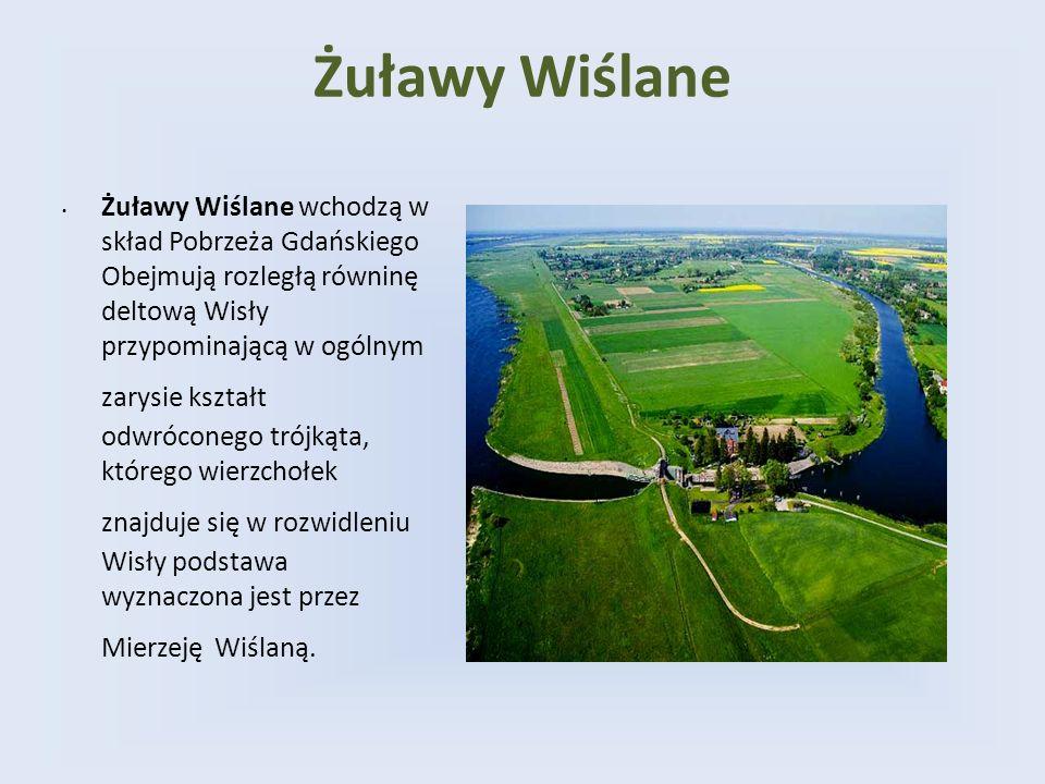 Żuławy Wiślane Żuławy Wiślane wchodzą w skład Pobrzeża Gdańskiego Obejmują rozległą równinę deltową Wisły przypominającą w ogólnym zarysie kształt odw