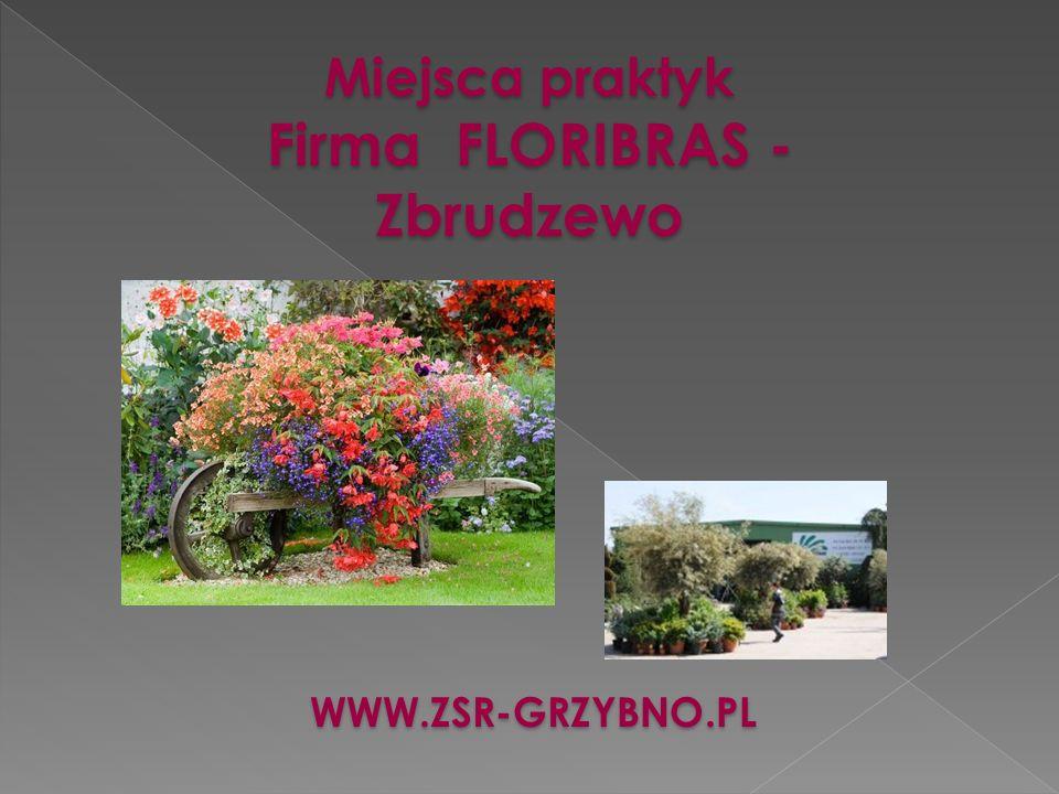 Miejsca praktyk Firma FLORIBRAS - Zbrudzewo WWW.ZSR-GRZYBNO.PL