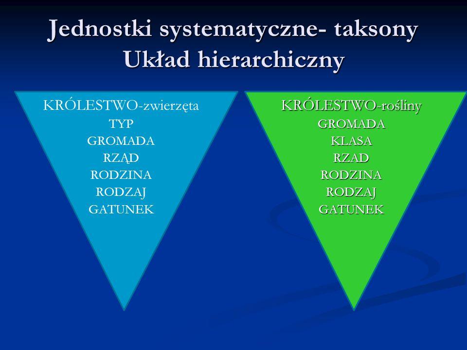 Jednostki systematyczne- taksony Układ hierarchiczny KRÓLESTWO-zwierzęta TYP GROMADA RZĄD RODZINA RODZAJ GATUNEKKRÓLESTWO-roślinyGROMADAKLASARZADRODZI