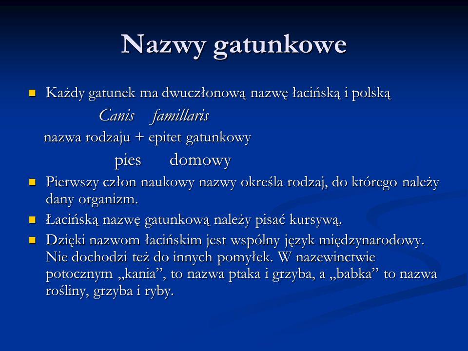 Nazwy gatunkowe Każdy gatunek ma dwuczłonową nazwę łacińską i polską Każdy gatunek ma dwuczłonową nazwę łacińską i polską Canis famillaris Canis famil