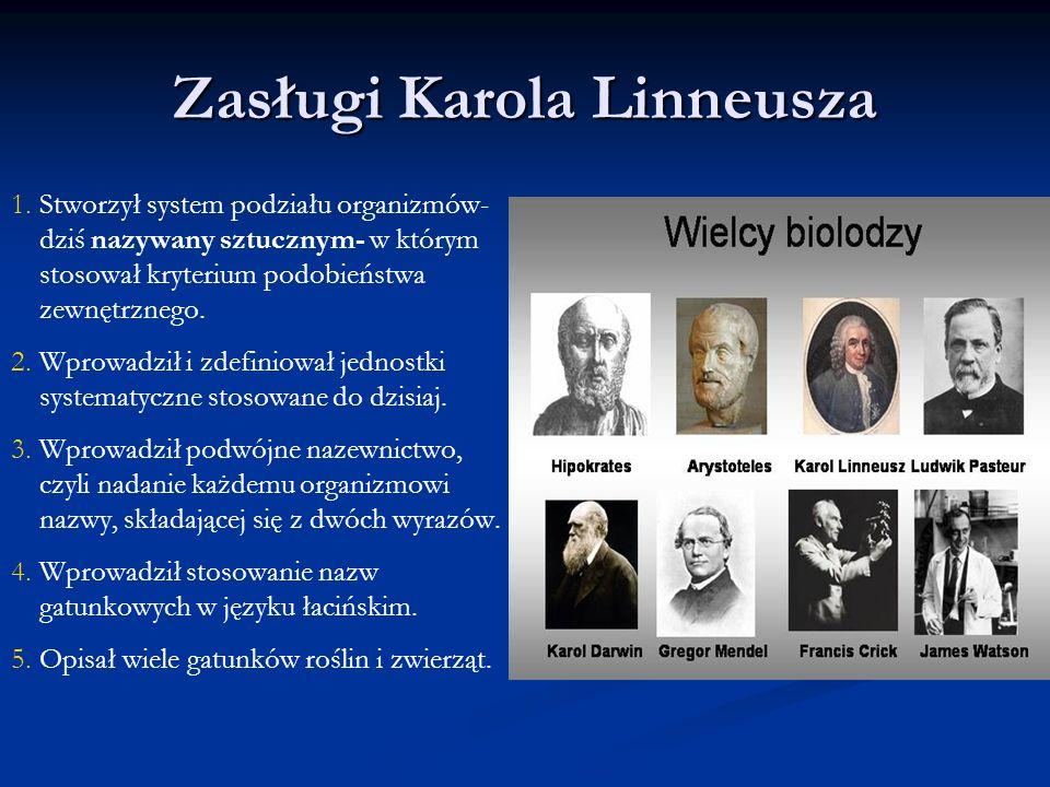 Zasługi Karola Linneusza 1. 1.Stworzył system podziału organizmów- dziś nazywany sztucznym- w którym stosował kryterium podobieństwa zewnętrznego. 2.