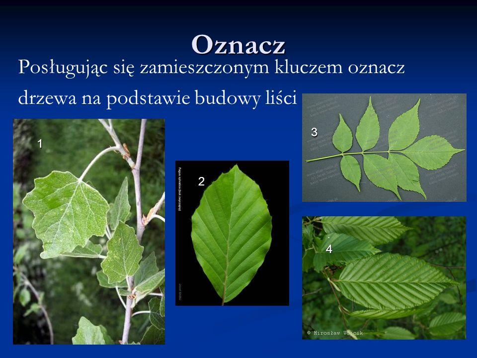 Oznacz Posługując się zamieszczonym kluczem oznacz drzewa na podstawie budowy liści 1 2 3 4