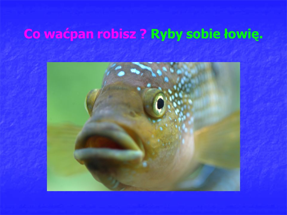 Co waćpan robisz Ryby sobie łowię.