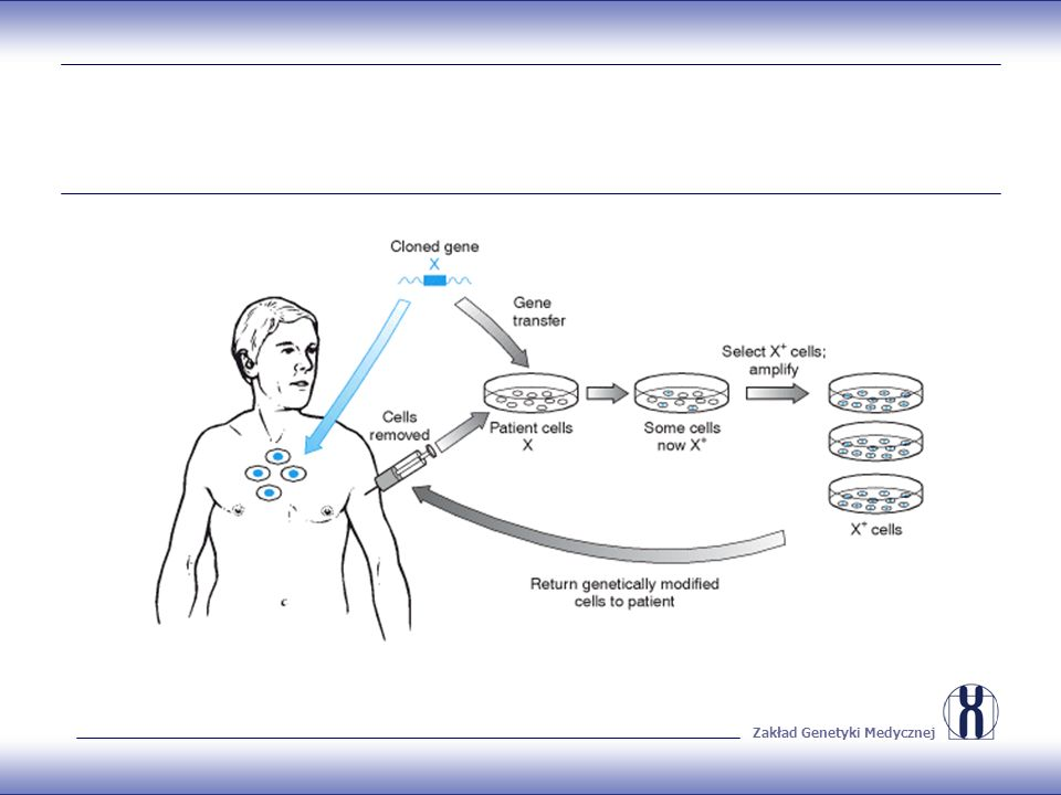 Podstawy 1.Efektywny transfer sklonowanych genów do komórek, celem wywołania ekspresji na możliwie wysokim poziomie 2.Wielkość wprowadzanego fragmentu bardzo ograniczona – zasadność stosowania cDNA flankowanego silnymi sekwencjami promotorowymi 3.Po transferze, geny mogą zintegrować się z genomem gospodarza lub pozostać niezintegrowane (episomy)