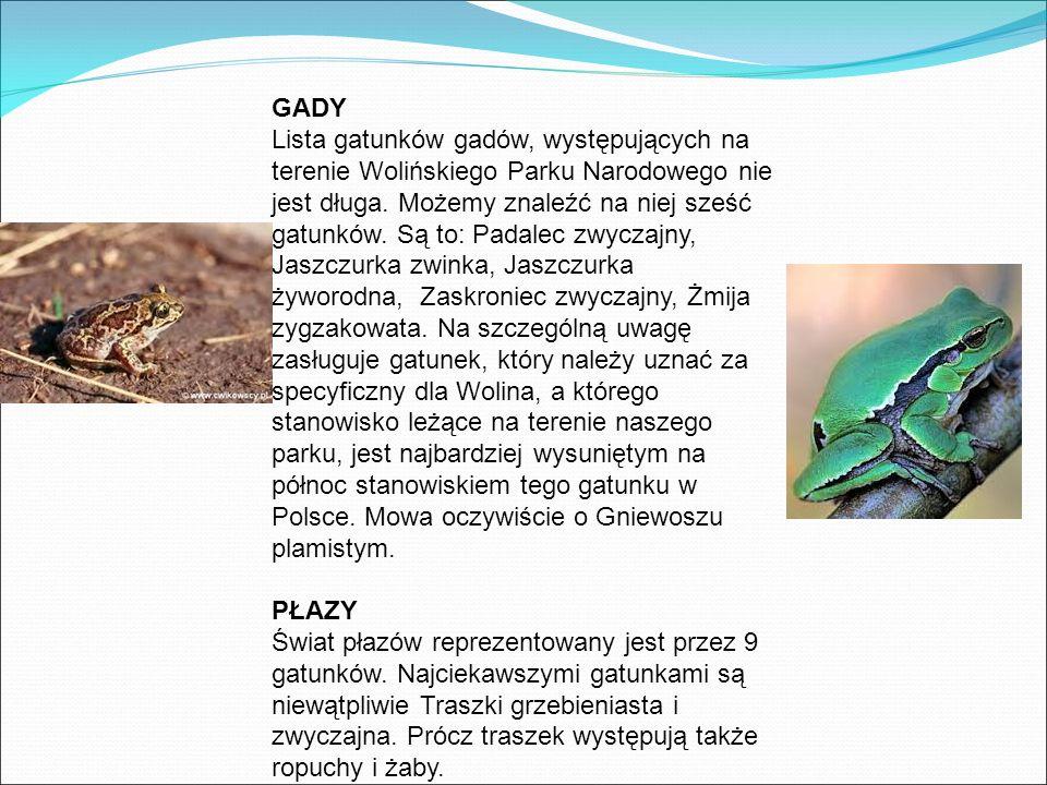 GADY Lista gatunków gadów, występujących na terenie Wolińskiego Parku Narodowego nie jest długa.