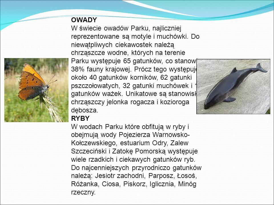 OWADY W świecie owadów Parku, najliczniej reprezentowane są motyle i muchówki.