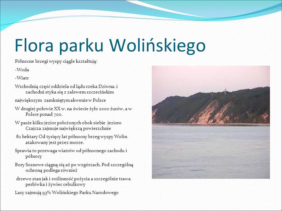 Flora parku Wolińskiego Północne brzegi wyspy ciągle kształtują: -Woda -Wiatr Wschodnią część oddziela od lądu rzeka Dziwna.