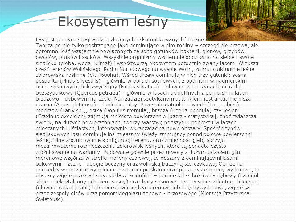 Ekosystem leśny Las jest jednym z najbardziej złożonych i skomplikowanych 'organizmów' na świecie.