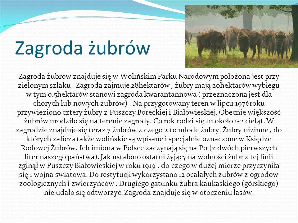 Zagroda żubrów Zagroda żubrów znajduje się w Wolińskim Parku Narodowym położona jest przy zielonym szlaku.