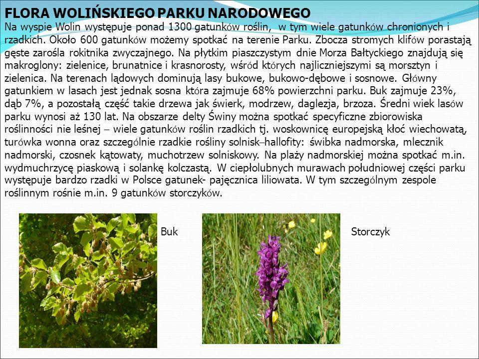 FLORA WOLIŃSKIEGO PARKU NARODOWEGO Na wyspie Wolin występuje ponad 1300 gatunk ó w roślin, w tym wiele gatunk ó w chronionych i rzadkich.