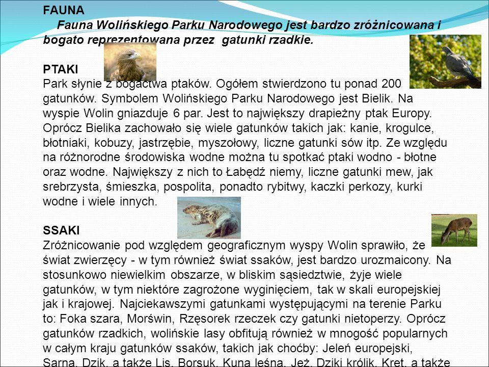 FAUNA Fauna Wolińskiego Parku Narodowego jest bardzo zróżnicowana i bogato reprezentowana przez gatunki rzadkie.