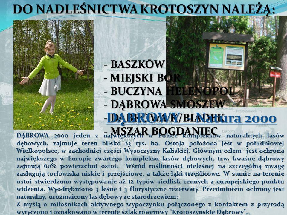 DO NADLEŚNICTWA KROTOSZYN NALEŻĄ: DĄBROWA 2000 jeden z największych w Polsce kompleksów naturalnych lasów dębowych, zajmuje teren blisko 23 tys. ha. O