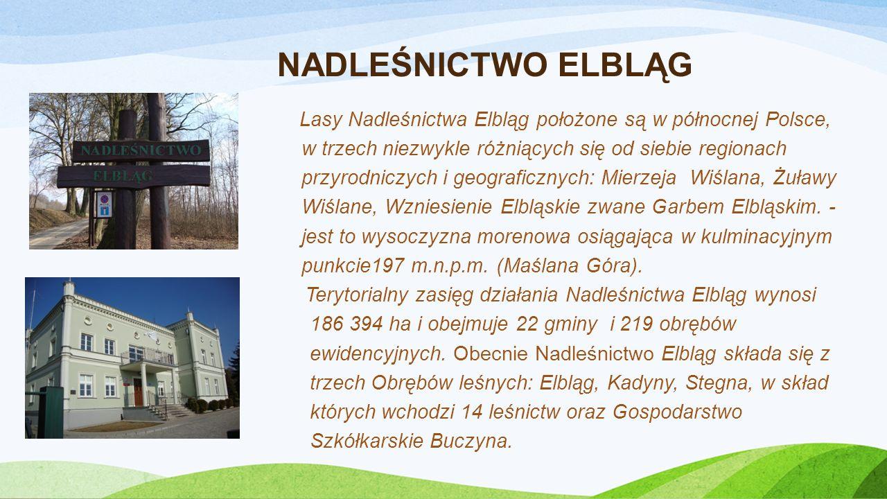 HERB ELBLĄGA I LOGO LASÓW PAŃSTWOWYCH Herb Elbląga i logo Lasów Państwowych widoczne są na zdjęciach satelitarnych Modrzewiny.