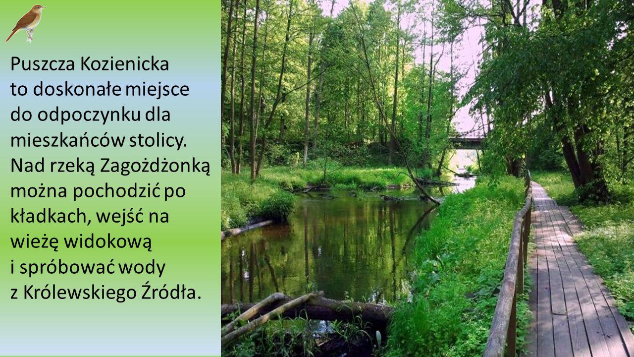 Puszcza Kozienicka Eryk Śmietanka, Roksana Krzywiec, Dominika Wiśniewska Szkoła Podstawowa nr 275 im. A. Oppmana w Warszawie, ul. Hieronima 2 kl. IV B