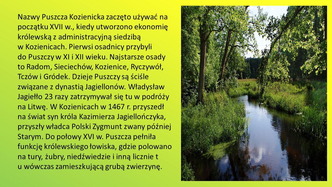 Nazwy Puszcza Kozienicka zaczęto używać na początku XVII w., kiedy utworzono ekonomię królewską z administracyjną siedzibą w Kozienicach.