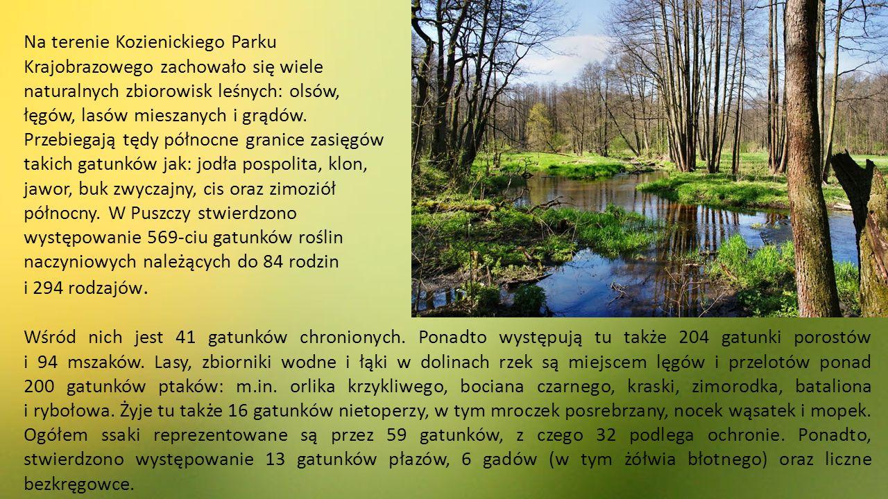 Na terenie Kozienickiego Parku Krajobrazowego zachowało się wiele naturalnych zbiorowisk leśnych: olsów, łęgów, lasów mieszanych i grądów.