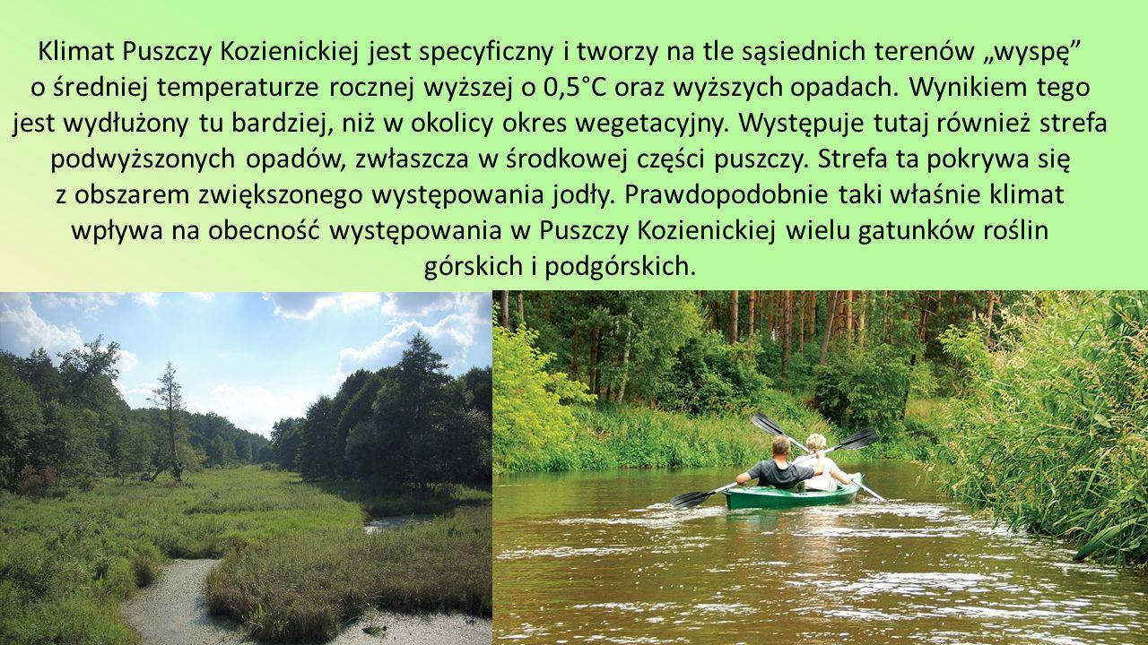 Teren Kozienickiego Parku Krajobrazowego stanowi doskonałą bazę dydaktyczną w rezerwatach -