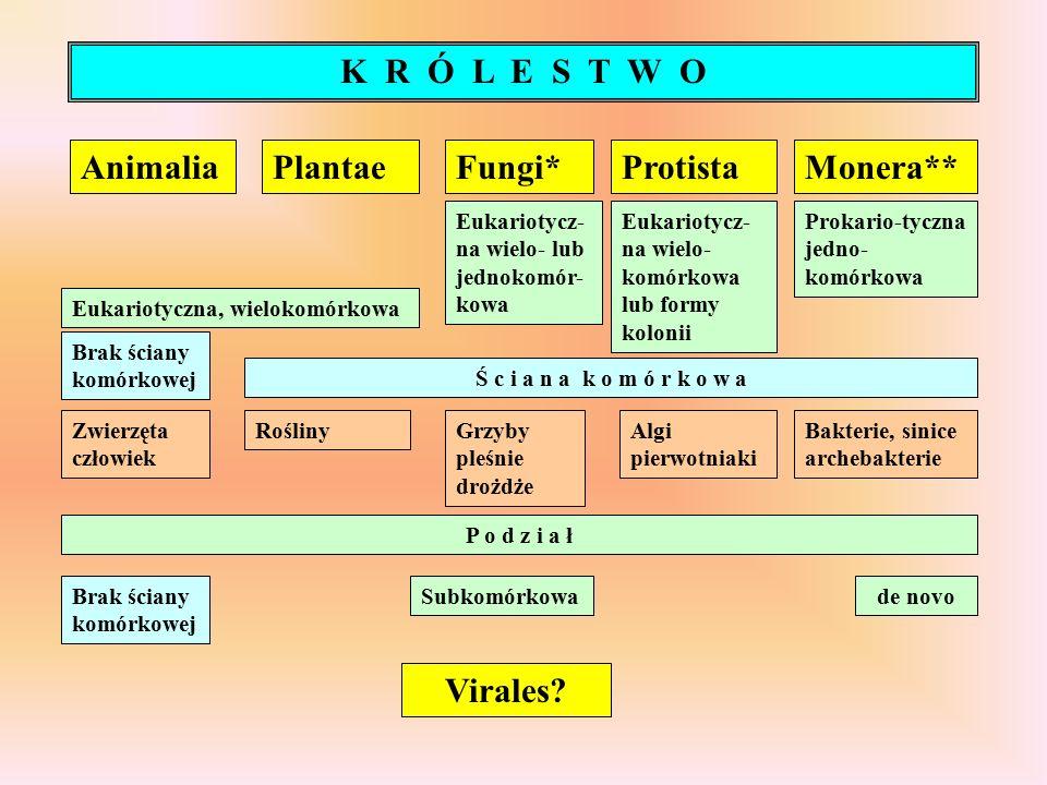 AnimaliaPlantaeFungi*ProtistaMonera** Eukariotyczna, wielokomórkowa Eukariotycz- na wielo- lub jednokomór- kowa Eukariotycz- na wielo- komórkowa lub formy kolonii Prokario-tyczna jedno- komórkowa Ś c i a n a k o m ó r k o w a Brak ściany komórkowej Zwierzęta człowiek RoślinyGrzyby pleśnie drożdże Algi pierwotniaki Bakterie, sinice archebakterie K R Ó L E S T W O P o d z i a ł SubkomórkowaBrak ściany komórkowej de novo Virales
