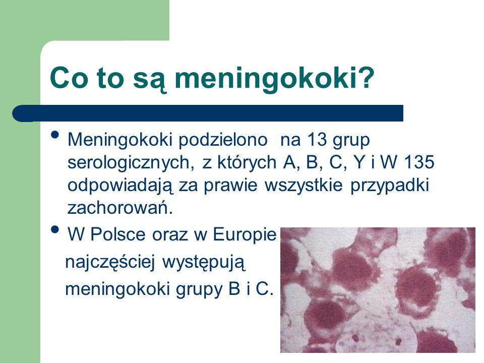 Co to są meningokoki.