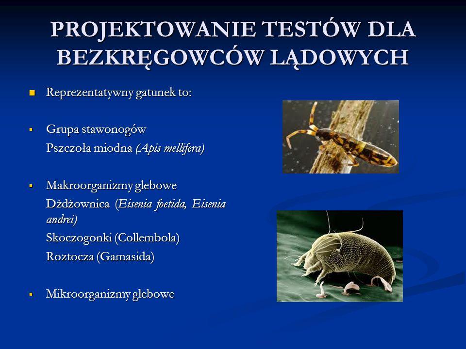 PROJEKTOWANIE TESTÓW DLA BEZKRĘGOWCÓW LĄDOWYCH Reprezentatywny gatunek to: Reprezentatywny gatunek to:  Grupa stawonogów Pszczoła miodna (Apis mellifera)  Makroorganizmy glebowe Dżdżownica (Eisenia foetida, Eisenia andrei) Skoczogonki (Collembola) Roztocza (Gamasida)  Mikroorganizmy glebowe