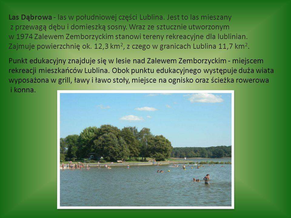 Las Dąbrowa - las w południowej części Lublina.