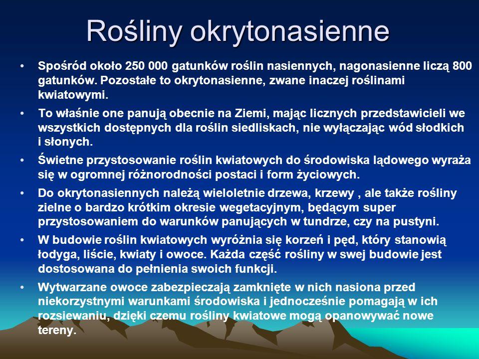 Rośliny okrytonasienne Spośród około 250 000 gatunków roślin nasiennych, nagonasienne liczą 800 gatunków.