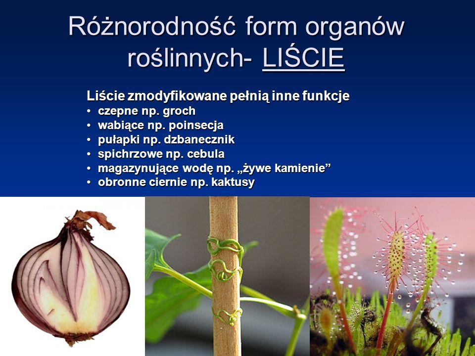 Różnorodność form organów roślinnych- LIŚCIE Liście zmodyfikowane pełnią inne funkcje czepne np.