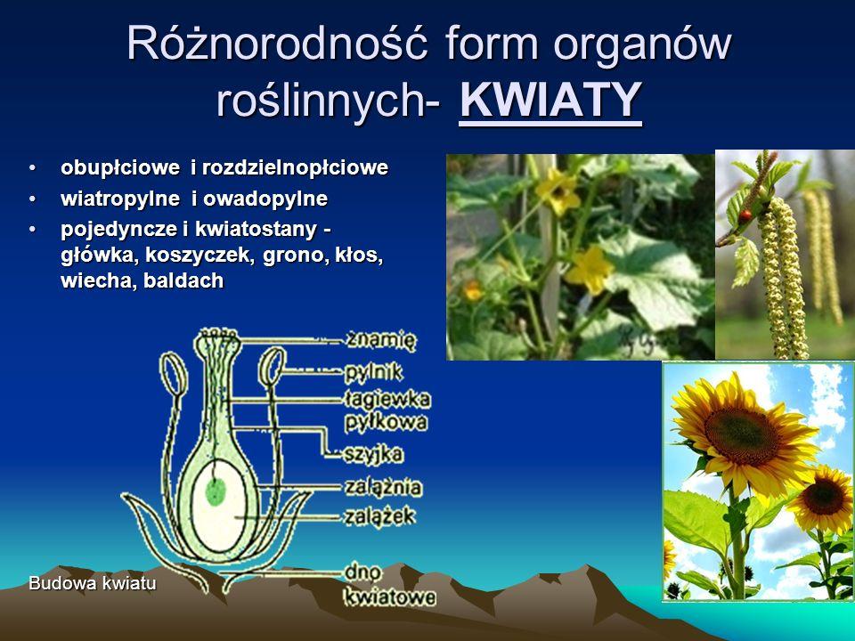 Różnorodność form organów roślinnych- KWIATY obupłciowe i rozdzielnopłcioweobupłciowe i rozdzielnopłciowe wiatropylne i owadopylnewiatropylne i owadopylne pojedyncze i kwiatostany - główka, koszyczek, grono, kłos, wiecha, baldachpojedyncze i kwiatostany - główka, koszyczek, grono, kłos, wiecha, baldach Budowa kwiatu