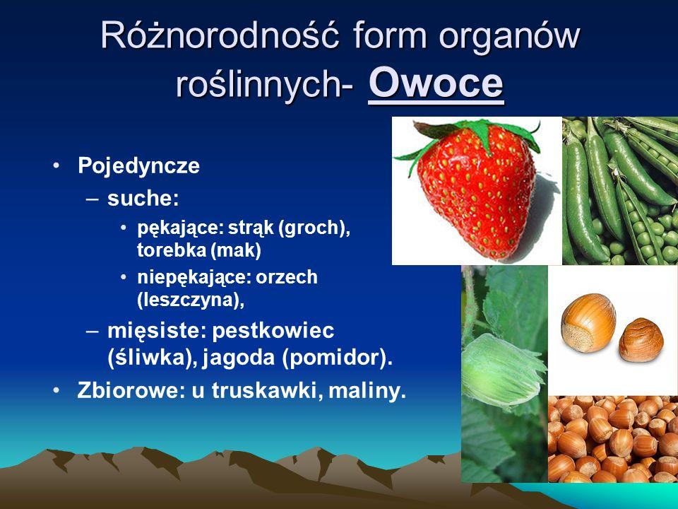 Różnorodność form organów roślinnych- Owoce Pojedyncze –suche: pękające: strąk (groch), torebka (mak) niepękające: orzech (leszczyna), –mięsiste: pestkowiec (śliwka), jagoda (pomidor).