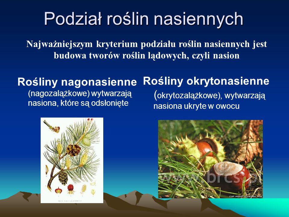 Podział roślin nasiennych Rośliny nagonasienne (nagozalążkowe) wytwarzają nasiona, które są odsłonięte Rośliny okrytonasienne ( okrytozalążkowe), wytwarzają nasiona ukryte w owocu Najważniejszym kryterium podziału roślin nasiennych jest budowa tworów roślin lądowych, czyli nasion