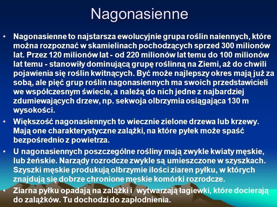 Nagonasienne Nagonasienne to najstarsza ewolucyjnie grupa roślin naiennych, które można rozpoznać w skamielinach pochodzących sprzed 300 milionów lat.