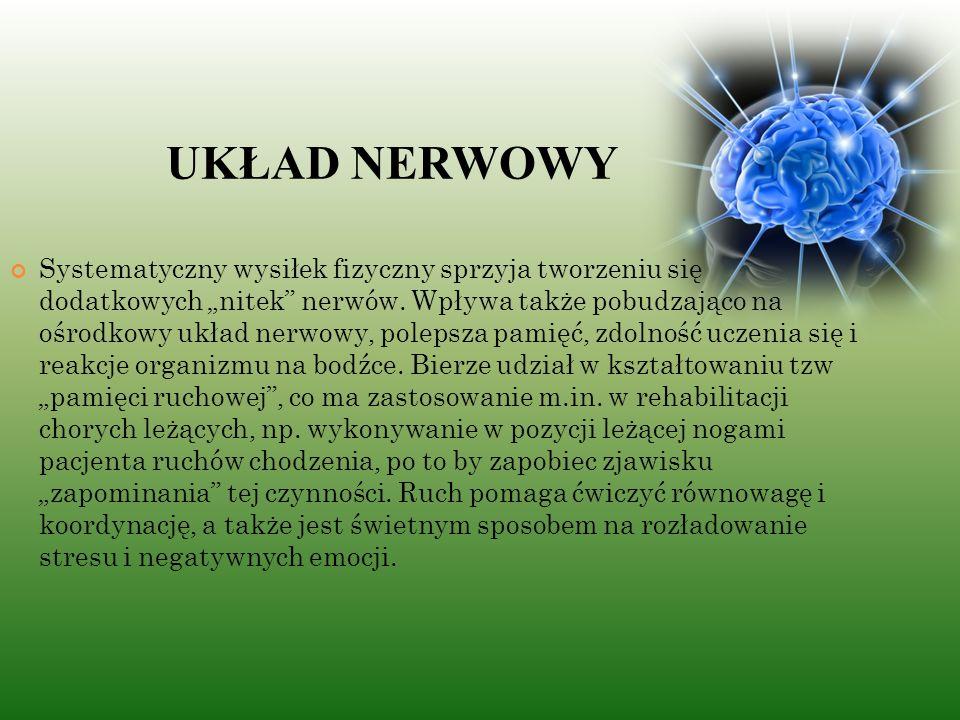 """UKŁAD NERWOWY Systematyczny wysiłek fizyczny sprzyja tworzeniu się dodatkowych """"nitek nerwów."""