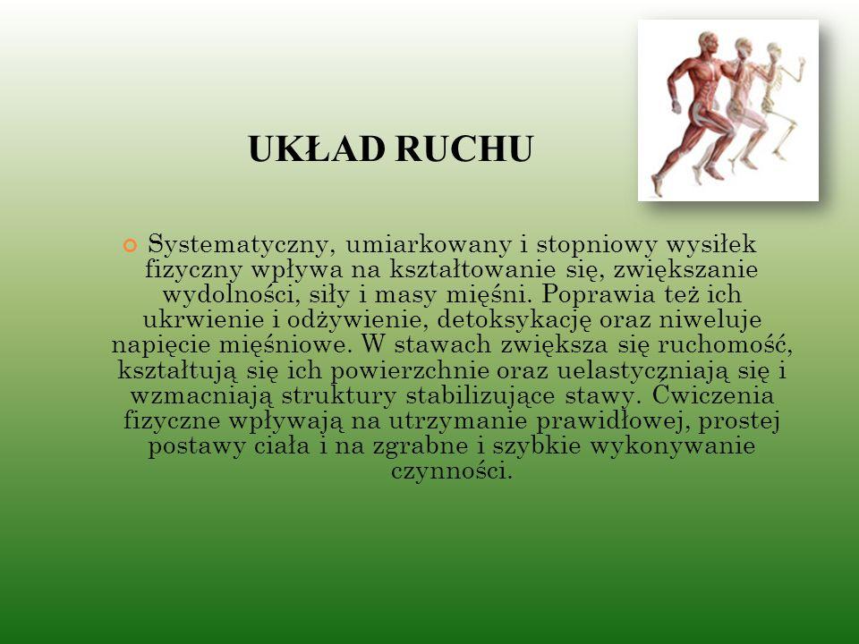 UKŁAD RUCHU Systematyczny, umiarkowany i stopniowy wysiłek fizyczny wpływa na kształtowanie się, zwiększanie wydolności, siły i masy mięśni.