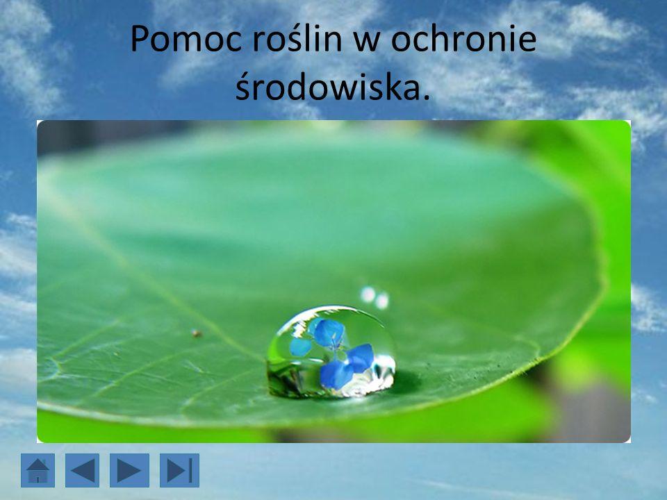 Pomoc roślin w ochronie środowiska.