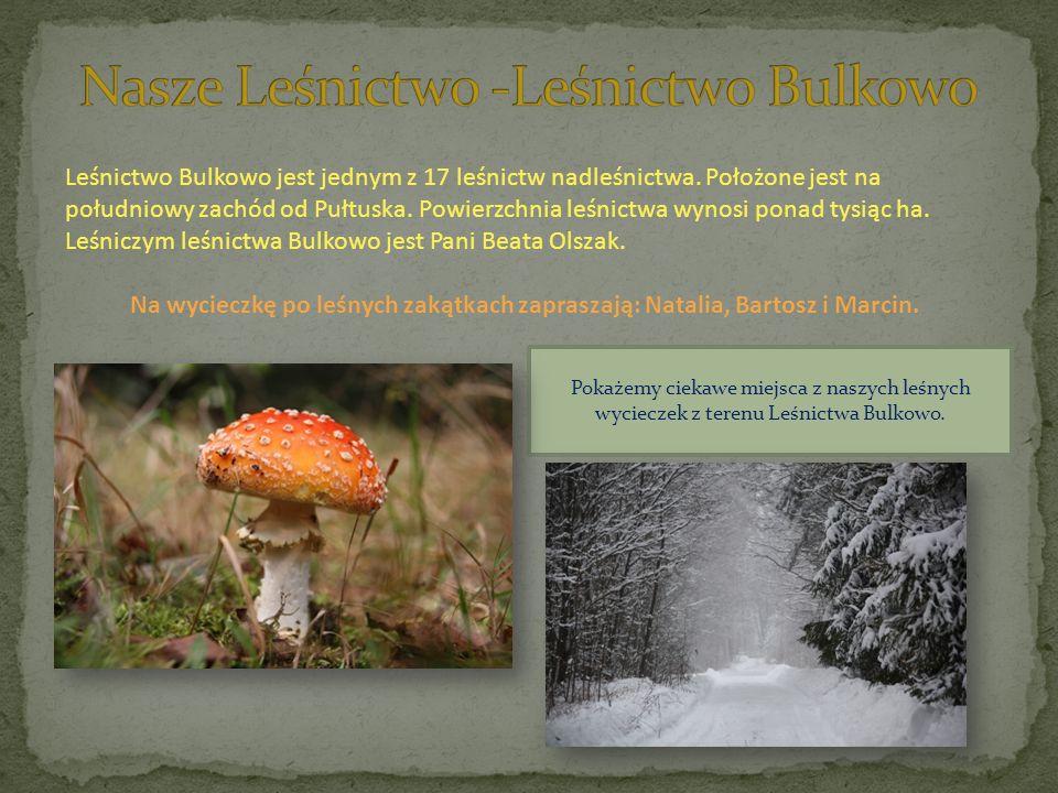 Leśnictwo Bulkowo jest jednym z 17 leśnictw nadleśnictwa. Położone jest na południowy zachód od Pułtuska. Powierzchnia leśnictwa wynosi ponad tysiąc h