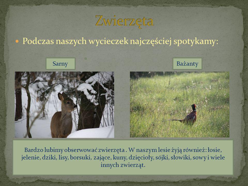 Podczas naszych wycieczek najczęściej spotykamy: SarnyBażanty Bardzo lubimy obserwować zwierzęta. W naszym lesie żyją również: łosie, jelenie, dziki,