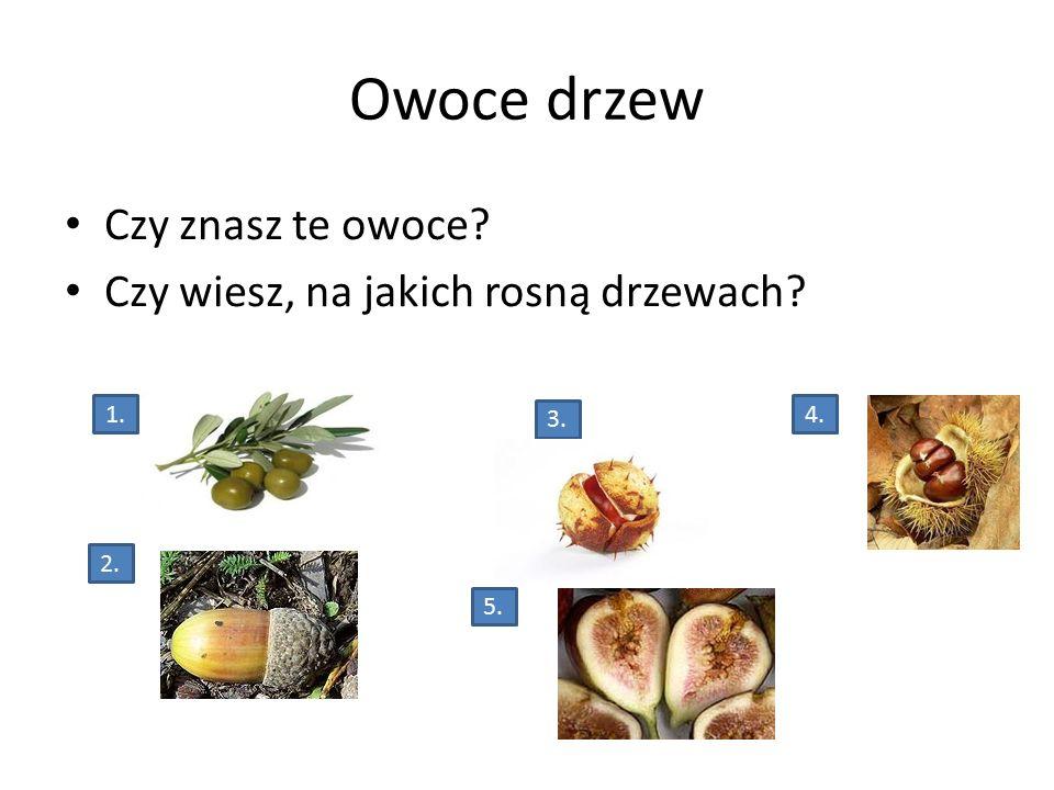 Owoce drzew Czy znasz te owoce? Czy wiesz, na jakich rosną drzewach? 1. 2. 5. 4. 3.