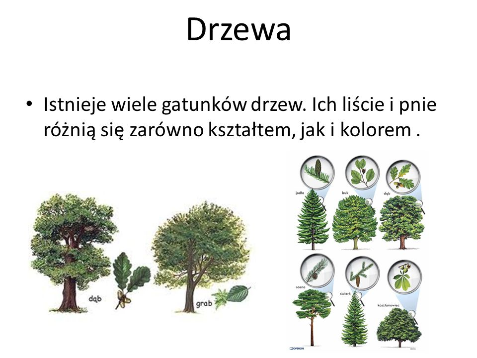 Istnieje wiele gatunków drzew. Ich liście i pnie różnią się zarówno kształtem, jak i kolorem.