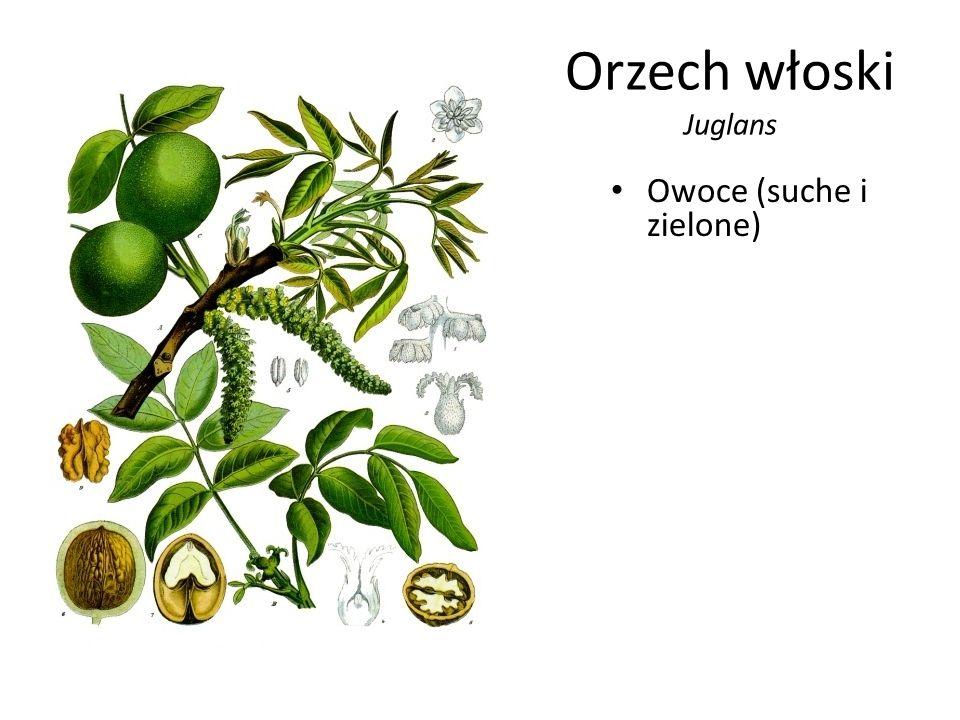 Orzech włoski Juglans Owoce (suche i zielone)