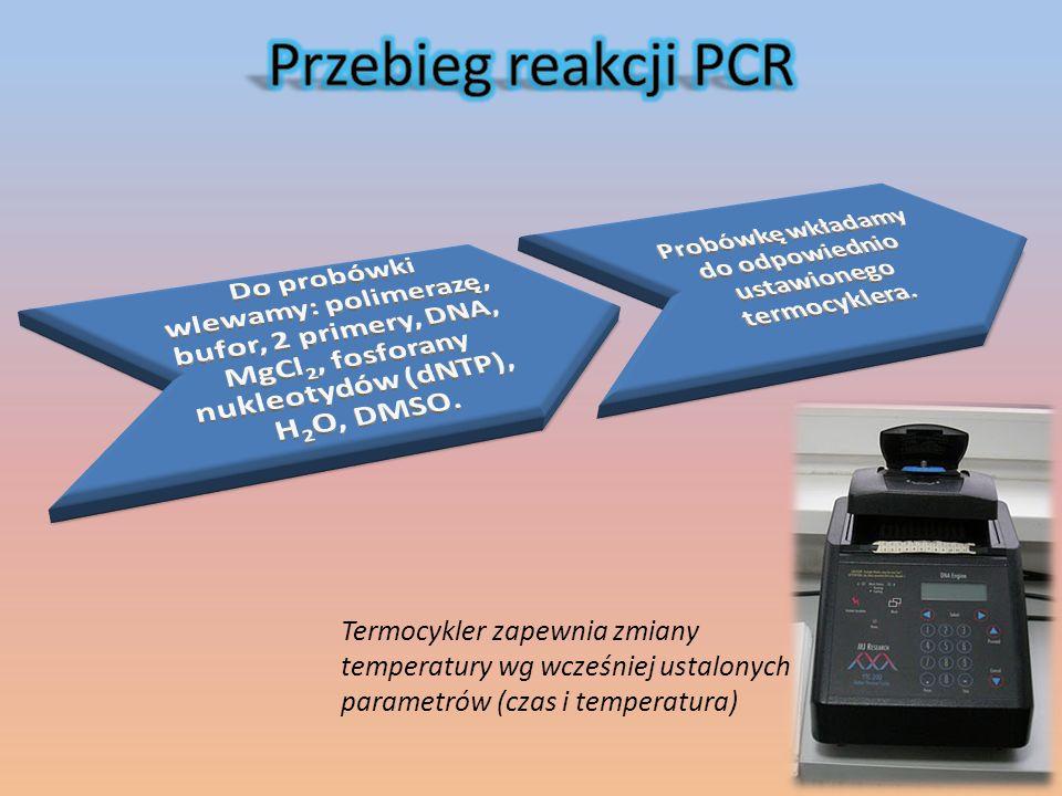 Termocykler zapewnia zmiany temperatury wg wcześniej ustalonych parametrów (czas i temperatura)