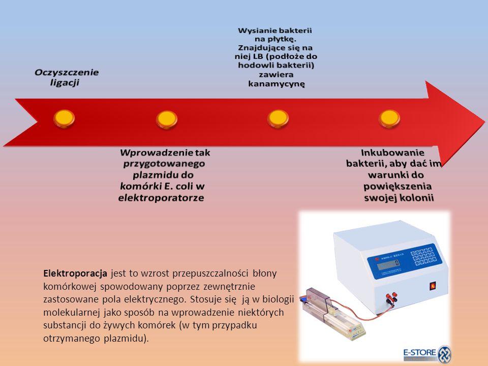 Elektroporacja jest to wzrost przepuszczalności błony komórkowej spowodowany poprzez zewnętrznie zastosowane pola elektrycznego.