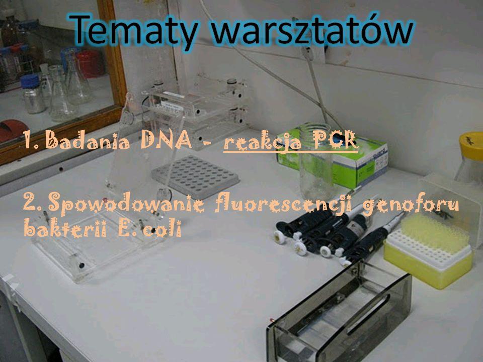 1. Badania DNA - reakcja PCR 2. Spowodowanie fluorescencji genoforu bakterii E. coli