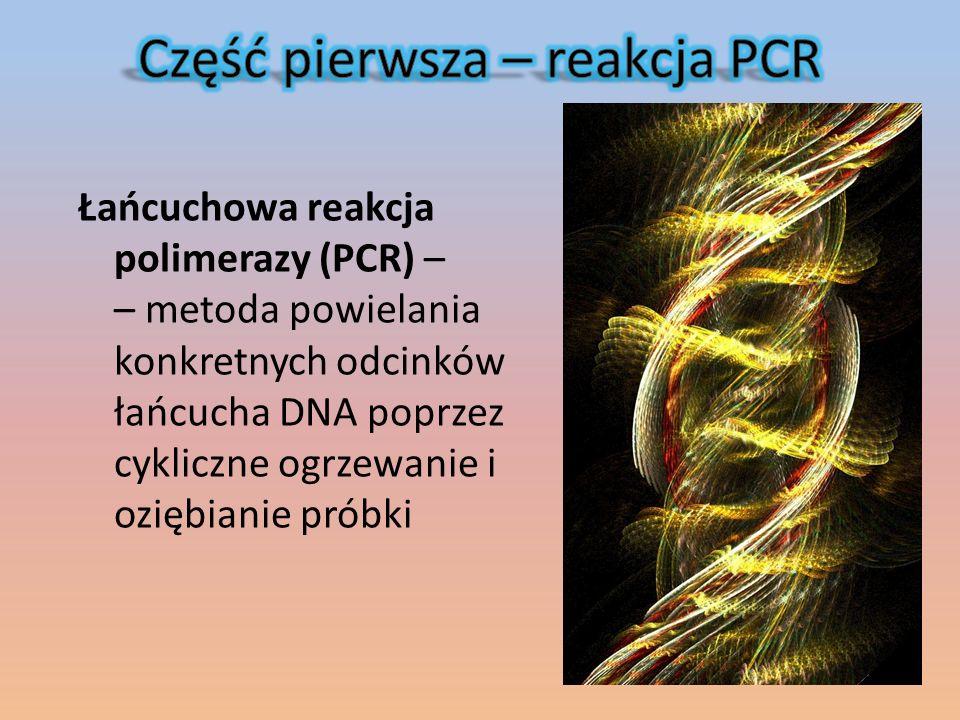 Łańcuchowa reakcja polimerazy (PCR) – – metoda powielania konkretnych odcinków łańcucha DNA poprzez cykliczne ogrzewanie i oziębianie próbki