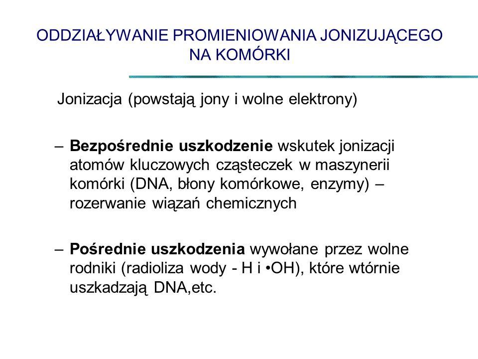 ODDZIAŁYWANIE PROMIENIOWANIA JONIZUJĄCEGO NA KOMÓRKI Jonizacja (powstają jony i wolne elektrony) –Bezpośrednie uszkodzenie wskutek jonizacji atomów kluczowych cząsteczek w maszynerii komórki (DNA, błony komórkowe, enzymy) – rozerwanie wiązań chemicznych –Pośrednie uszkodzenia wywołane przez wolne rodniki (radioliza wody - H i OH), które wtórnie uszkadzają DNA,etc.