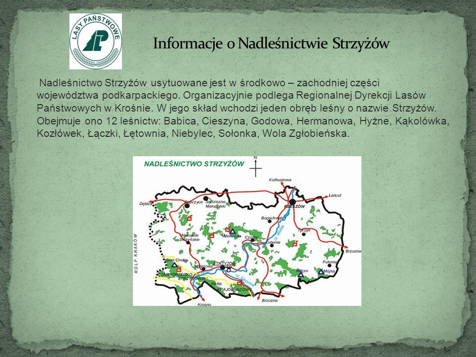 Nadleśnictwo Strzyżów usytuowane jest w środkowo – zachodniej części województwa podkarpackiego. Organizacyjnie podlega Regionalnej Dyrekcji Lasów Pań