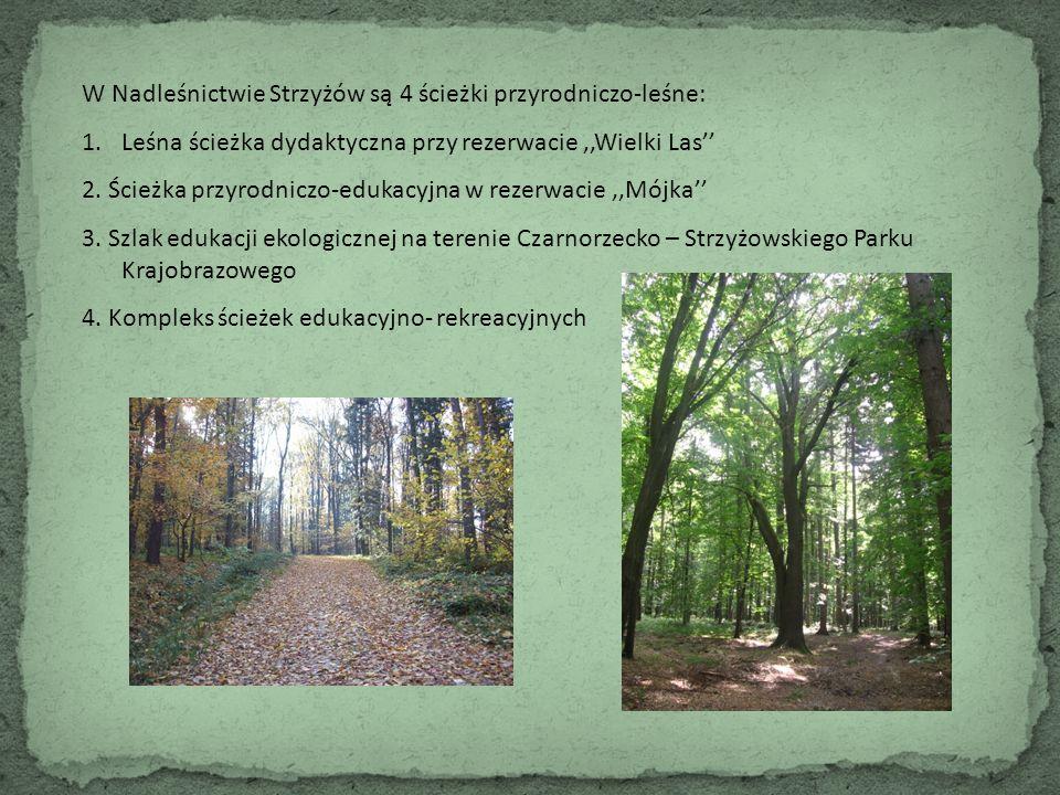 W Nadleśnictwie Strzyżów są 4 ścieżki przyrodniczo-leśne: 1.Leśna ścieżka dydaktyczna przy rezerwacie,,Wielki Las'' 2. Ścieżka przyrodniczo-edukacyjna
