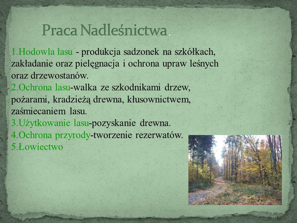 1.Hodowla lasu - produkcja sadzonek na szkółkach, zakładanie oraz pielęgnacja i ochrona upraw leśnych oraz drzewostanów. 2.Ochrona lasu-walka ze szkod